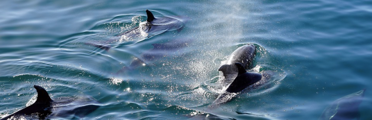 Capture d'écran 2019-05-08 à 19.26.07